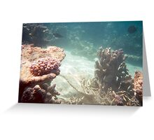 Reef Greeting Card