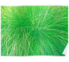 Abstract Grass photo painting Poster