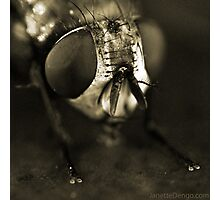 Fly Photographic Print