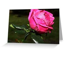 Like Pink Tissue Paper Greeting Card