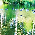 Pond with Geese photo painting by randycdesign