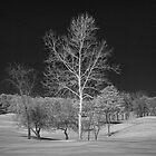 The Bryan Tree by heavyh20