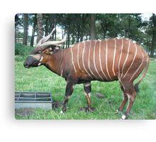 Stripey Gazelle Canvas Print