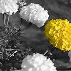 A Yellower Flower by heavyh20