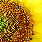 Yellow days! by rasim1