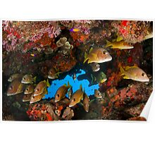 Fish in an underhang Poster