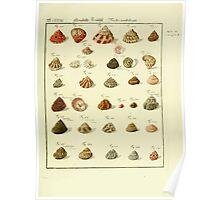Neues systematisches Conchylien-Cabinet - 275 Poster