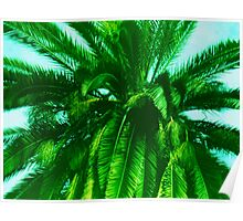 Palm Tree photo painting Poster