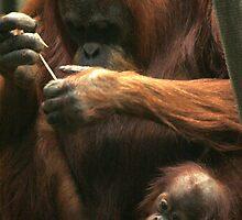 Are we there yet? Orang-utan mum and baby. by kkimi88