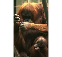 Are we there yet? Orang-utan mum and baby. Photographic Print