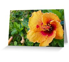 Flowers of Hawaii Greeting Card