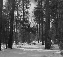 Arizona Snow by azphotographydd
