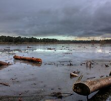 The Moss, Delamere. by kkimi88