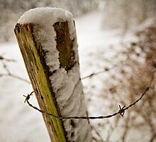 Barbed & Bitting Winter by Boston Thek Imagery