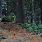 National Park Pelister by Ivan Litovski