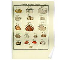 Neues systematisches Conchylien-Cabinet - 322 Poster