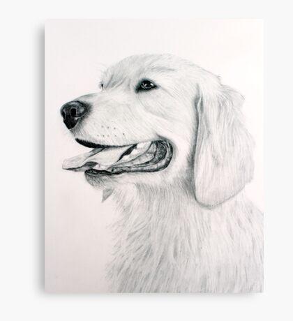 Golden Retreiver Canvas Print