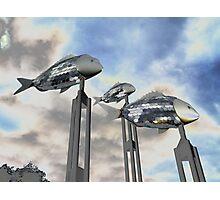 Swinging Fish, Parramatta River, NSW, Australia 2012 Photographic Print