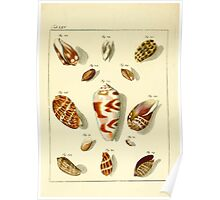 Neues systematisches Conchylien-Cabinet - 169 Poster