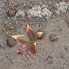 Autumn Leaf in the Dust by scholara
