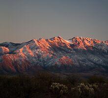 Snow Capped Santa Ritas at Sunset by David F Putnam