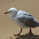 Fluffy Seagull by reflector