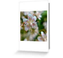 Beautiful & Delicate Greeting Card