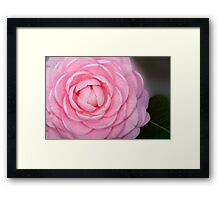 Pink Perfection Camellia Framed Print