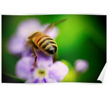 Bee Bum Poster