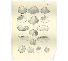 Manual of the New Zealand Mollusca by Henry Sutter 1915 0249 Dosinia Zenatia Poster