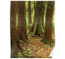 Hoh Rain Forest Poster