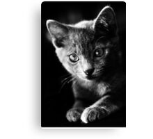 kitten I Canvas Print