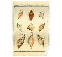 Neues systematisches Conchylien-Cabinet - 183 Poster