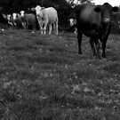 until the cows come home by Bronwen Hyde