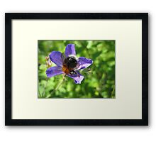 Bumble Bee And The Purple Flower Framed Print