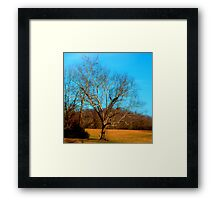 BARE LIMBS Framed Print