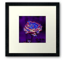 Blue and Purple Rose Framed Print