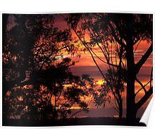 "'Dawn through the Trees"" Poster"
