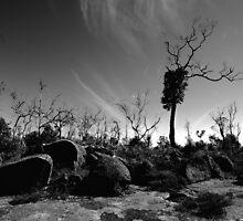 The Dead of Mount Davy by John Peel