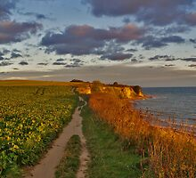 Pathway at the Coast by Hilthart Pedersen