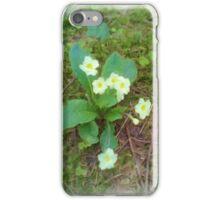 primrose Flower iPhone Case/Skin