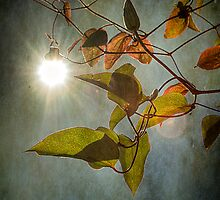 Hanging Sun by Gerry Chaney