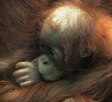Enveloped in your arms, baby orangutan. by kkimi88