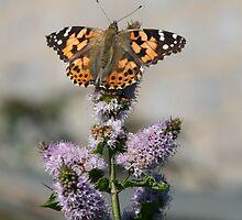 2009 summer wildlife in Aberdeen  by nick9