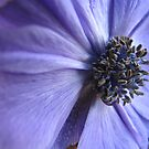 Blue Anenome by Pamela Jayne Smith