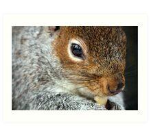 Squirrel nut kin. Art Print