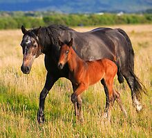 Mare  and  Foal. Ireland by EUNAN SWEENEY