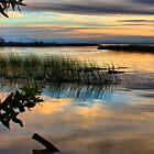 Wetland Sunset by Barbara  Brown