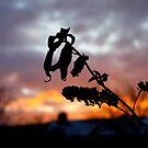 Sunset Garden. by stanegg