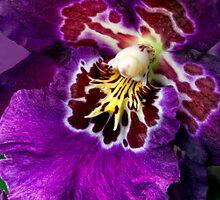 Purple Ruffles by Ann J. Sagel